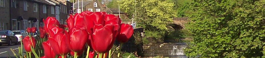 barrowford-tulips-bridge.jpg